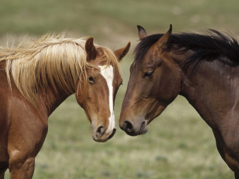Horse Trade on the Clean Air Act